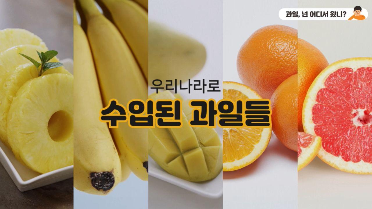 과일, 넌 어디서 왔니?